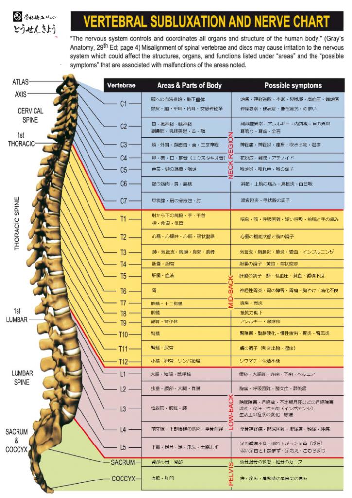 【骨】と【関連する臓器と症状】の一般統計表