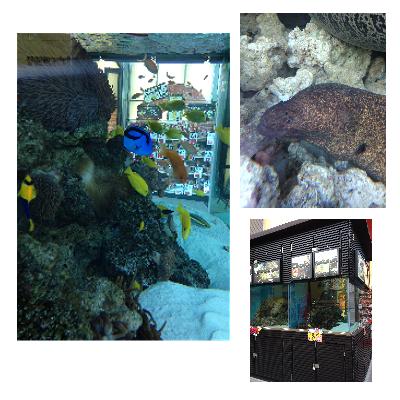 街角の水族館