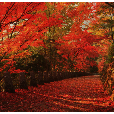 鮮やか紅葉