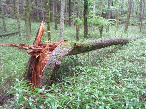 木が折れる
